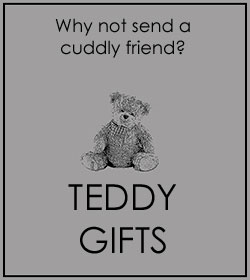 teddy-kat Suggestions